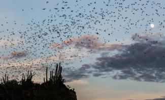 Bat_cave_in_El_Maviri_Sinaloa_-_Mexico
