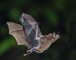 nature-leaf-wildlife-mammal-fauna-vertebrate-268323-pxhere.com